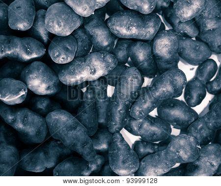 truffle vitelotte potato, closeup view