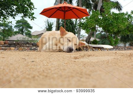 Lazy Dog Relaxing And Sleeping On Sand Beach