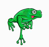 image of amphibious  - colorful cartoon illustration of a frog jumping on a white background - JPG
