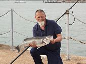 stock photo of specimens  - A fisherman with his rod caught specimen seabass of 9lb 11oz - JPG