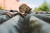 stock photo of licking  - Cat on a roof outdoors - JPG