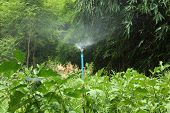 image of sprinkling  - Water sprinkle working in the vegetable garden - JPG