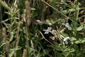 image of hummingbirds  - A hummingbird or Trochilidae flies  towards  white flower for nectar - JPG