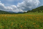 stock photo of cloud forest  - Beautiful mountain landscape with orange flowers in the meadow on a background of mountains forest and blue sky with clouds - JPG