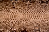 picture of pythons  - Subsequently painted natural python skin close up - JPG