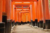 image of inari  - Torii in Fushimi Inari Shrine Taisha Kyoto Japan - JPG