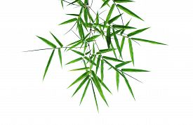 image of bamboo leaves  - Green Bamboo leaves isolated on white background - JPG