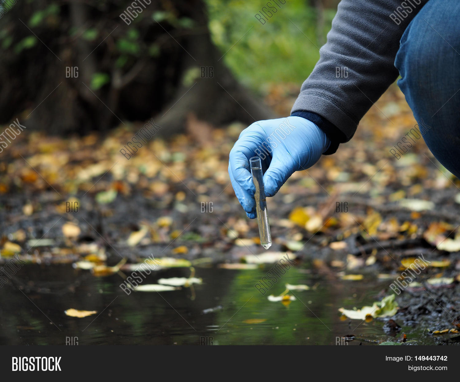 Water Sample. Hand In Glove Collects Water From A Puddle In A Test ...