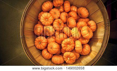Basket with small orange pumpkins background