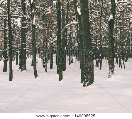 Landscape in winter fores after the snowfall