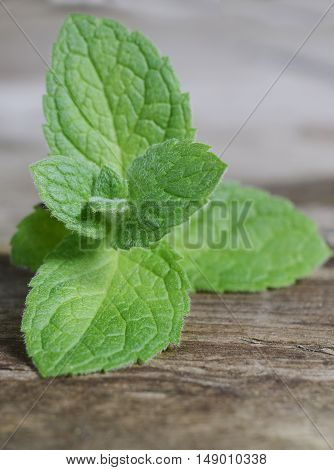 Close up fresh green peppermint leaves. Mint herbs on vintage wooden surface.