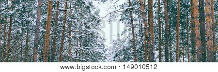 Beautiful landscape in winter forest after snowfall