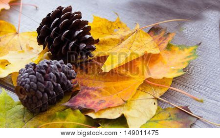 pine cones and yellow leaves of autumn coziness