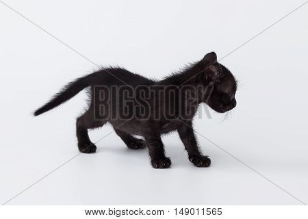 Cute Kitty Balck Cat Playing On White Background