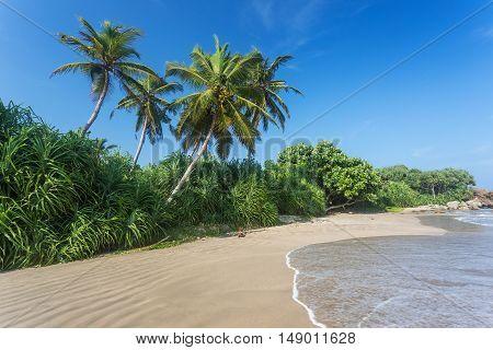 Sandy beach with palm trees rocks and blue sky. Yellow sand tropical island on vacation. Sri Lanka