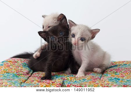 Relax Group Cute Kitty Cat Playing