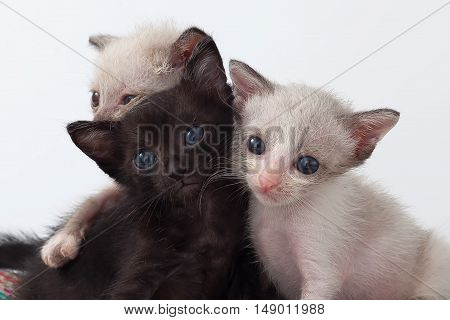 Group Cute Kitty Cat Relax On White Background
