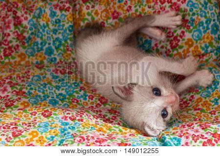 Cute Happy Kitty Cat Relax