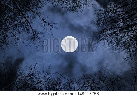 Shining full moon in the night sky and dramatic night clouds -night mysterious landscape in cold tones. Night sky gothic background with full moon beneath the clouds and silhouettes of the bare trees