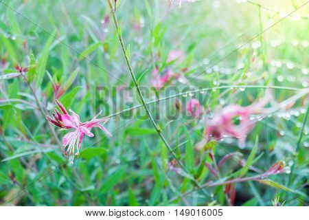 Pink flower with green grass in a park