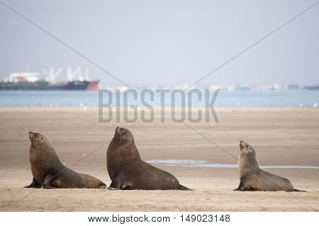 Three Seals On The Beach