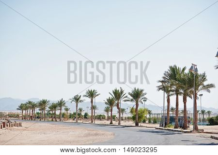 Road Of Street On Egypt At Sunny Day With Palms