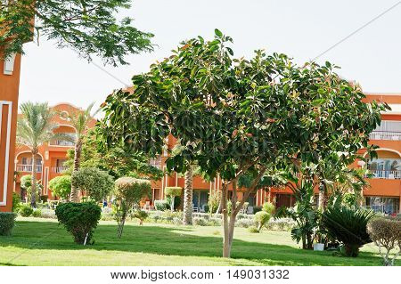 Different Trees And Bushes On Garden Of Resort