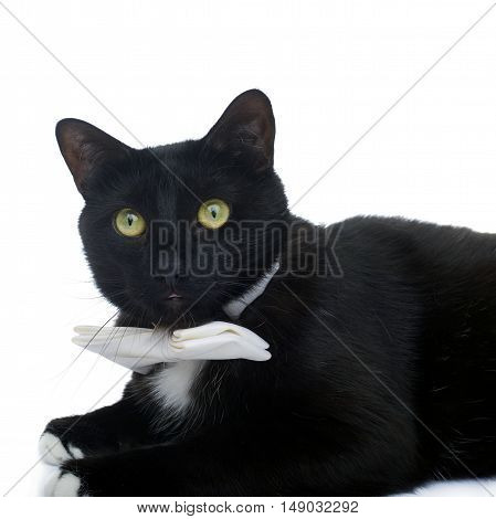 Lying on the floor black cat with bow tie isolated over the white background