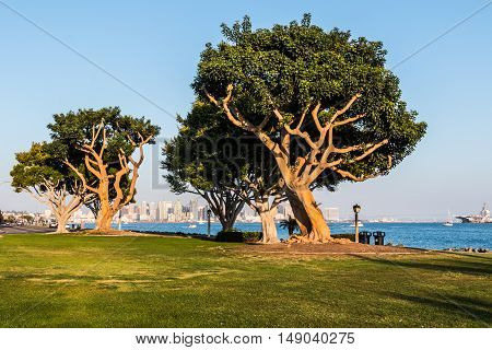 Harbor Island coral trees with San Diego bay, city skyline, and military vessel.