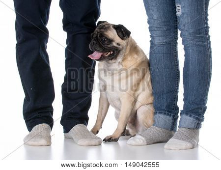 mixed breed dog sitting at the feet of his owners on white background