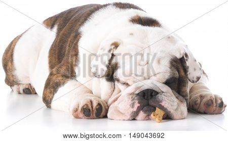 english bulldog sleeping with bone hanging out of mouth