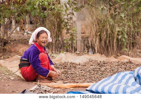 CHIANGMAI,THAILAND - JANUARY 11, 2015: Unidentified Palaung woman in the Palaung traditional costume prepares black bean seeds for planting.