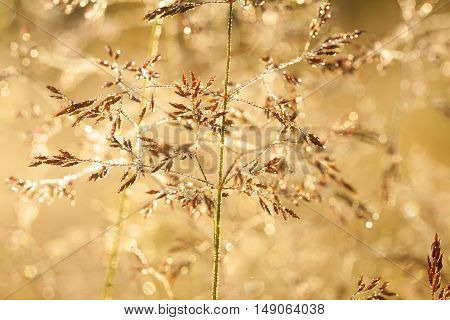 blur background on a summer meadow from a grass