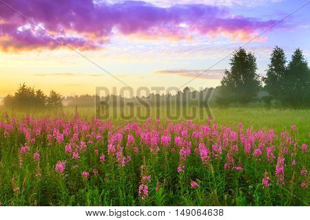 rural summer landscape with sunrise a blossoming meadow and fog