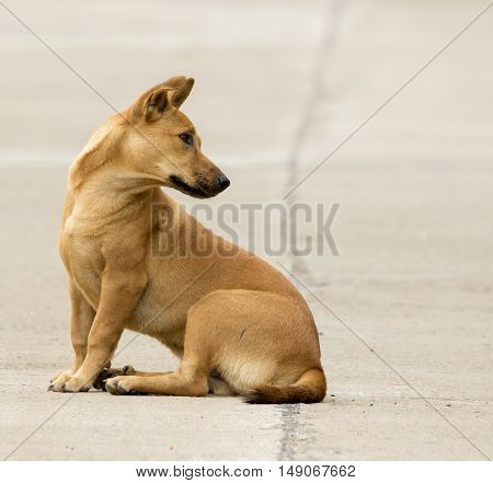 Image of a brown dog on street.