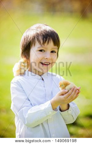 Sweet Cute Child, Preschool Boy, Playing With Little Newborn Chick In The Park