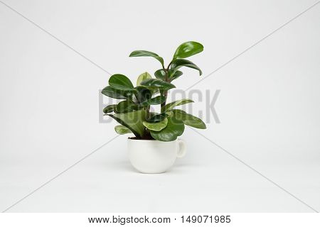 Decorative tree in ceramic planter on a white background