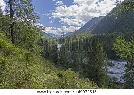 The Kucherla river in the gorge. Sunny summer day. Altai Mountains Russia.