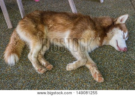 Dog sleeping on the grass in garden