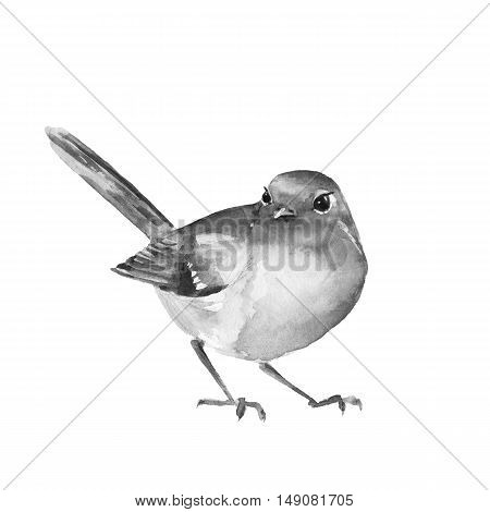 Watercolor bird Robin. Black and white illustration. Isolated