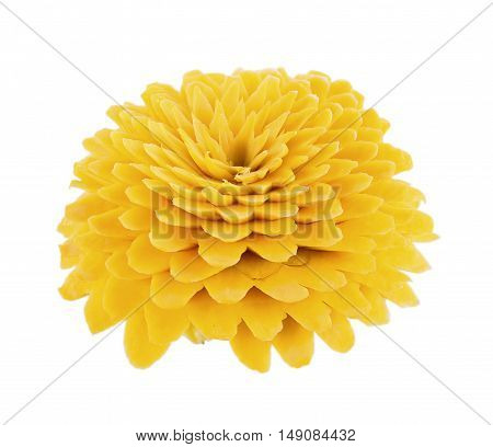 Beetroot Pumpkin Carving Flower on white background