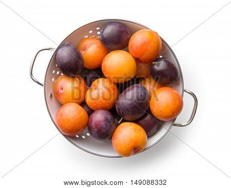 Yellow and purple plums in colander. Top view.