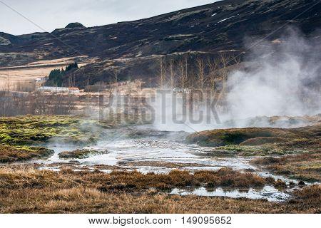 Geothermal Swamp In Icelandic Nature