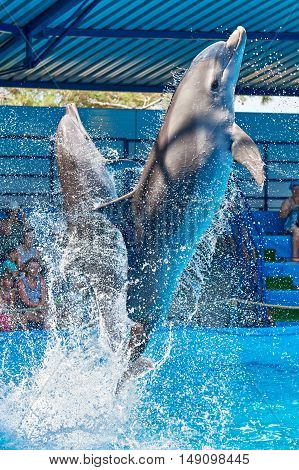 Dolphins Jumping Out Of Water On Circus Show