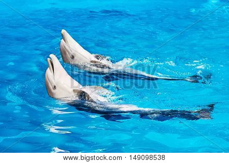 Dolphins Swimming Into Pool On Circus Show
