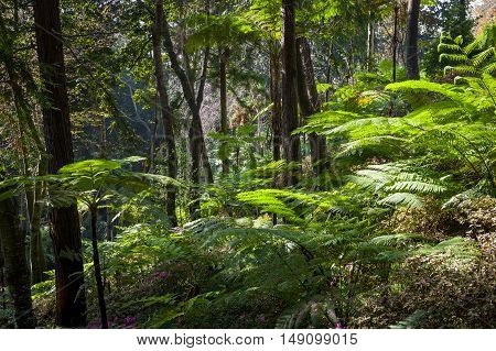 Tropical forests of Monte garden. Madeira island.