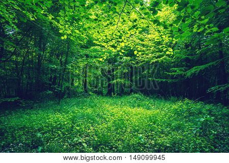 Green Leaves In A Forest Clearing