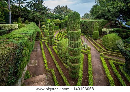 Decorative green plants view at Botanical garden in Funchal, Madeira island, Portugal.