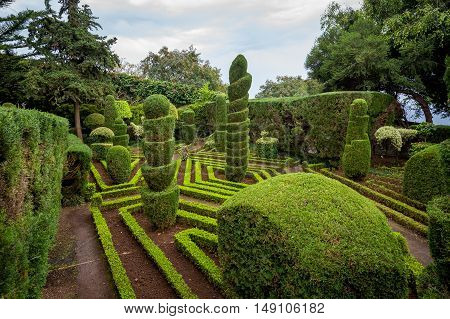 Shaped green plants and footsteps at Botanical garden in Funchal, Madeira island, Portugal.