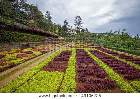 Decorative colorful flowers fields at Botanical garden in Funchal. Madeira island, Portugal.